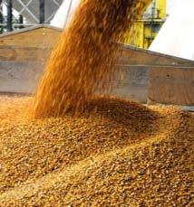Feed stocks 80 Glucan conversion 60