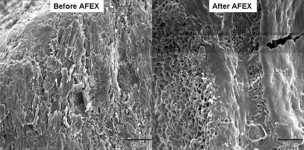 Surface Characterization by Electron Microscopy Untreated Corn Cob Granule (100x) AFEX treated Corn Cob Granule (100x) SEM images of corn cob granules indicate that AFEX is responsible for